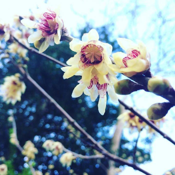 2018 blossom a-blossommin'